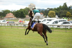 A fit and enthusiastic Cascada on her way to the start under Warren Kennedy. Image: Candiese Marnewick