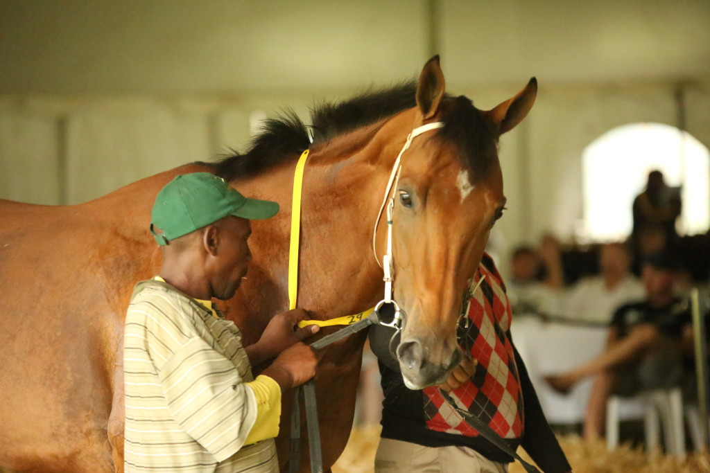 Monte Christo, the full brother to Dawn Calling. Image: Candiese Marnewick