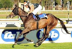 African Love, a resident broodmare of Rathmor Stud and closely related to Bounding. Image: JC Photos