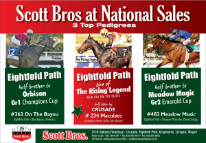 Eightfold Path At The National Yearling Sale