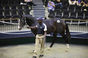 BLOODSTOCK SOUTH AFRICA SALES UPDATE:  PRESS RELEASE
