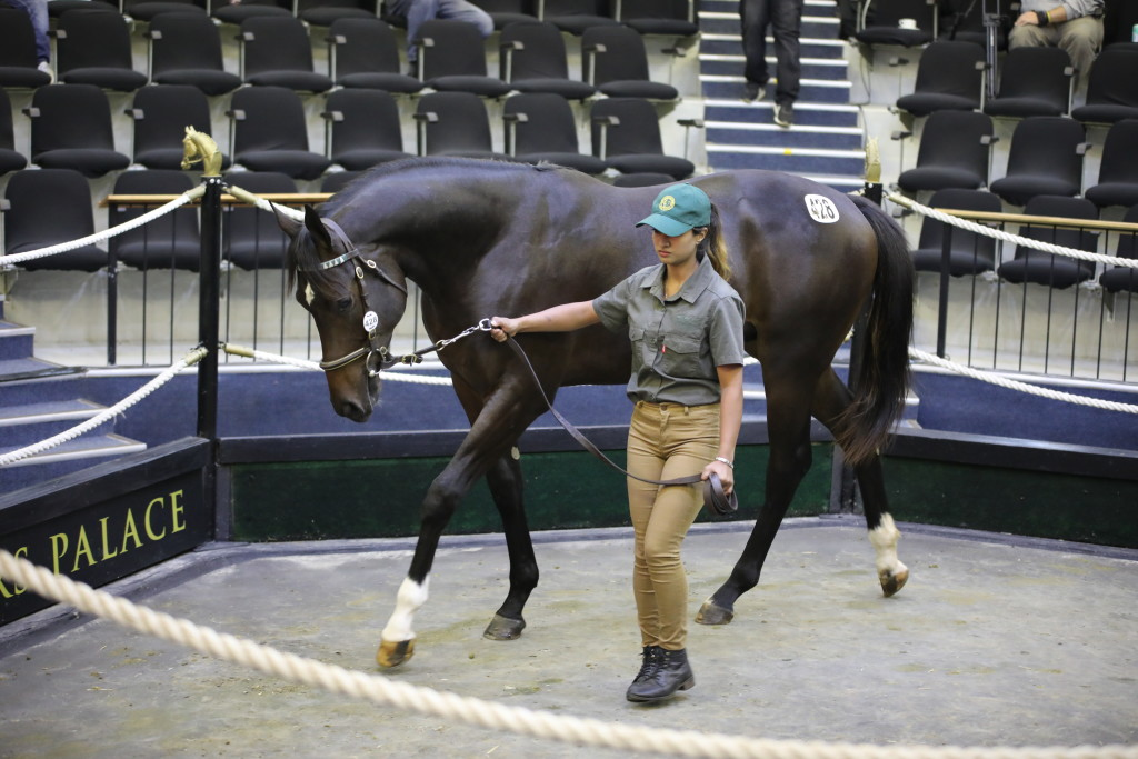Lot 428, the magnificent colt half-brother to Lala sold to Doug Campbell from Summerhill Stud. Image: Candiese Marnewick