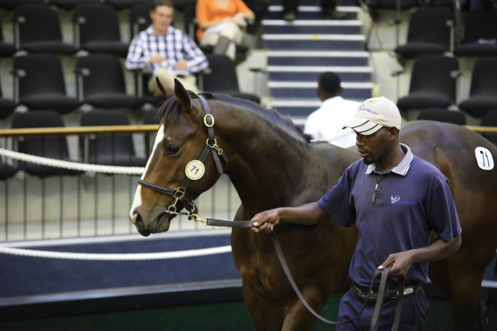 Lot 71, the Pathfork half-brother to Neptune's Rain sold for R300 000. Image: Candiese Marnewick