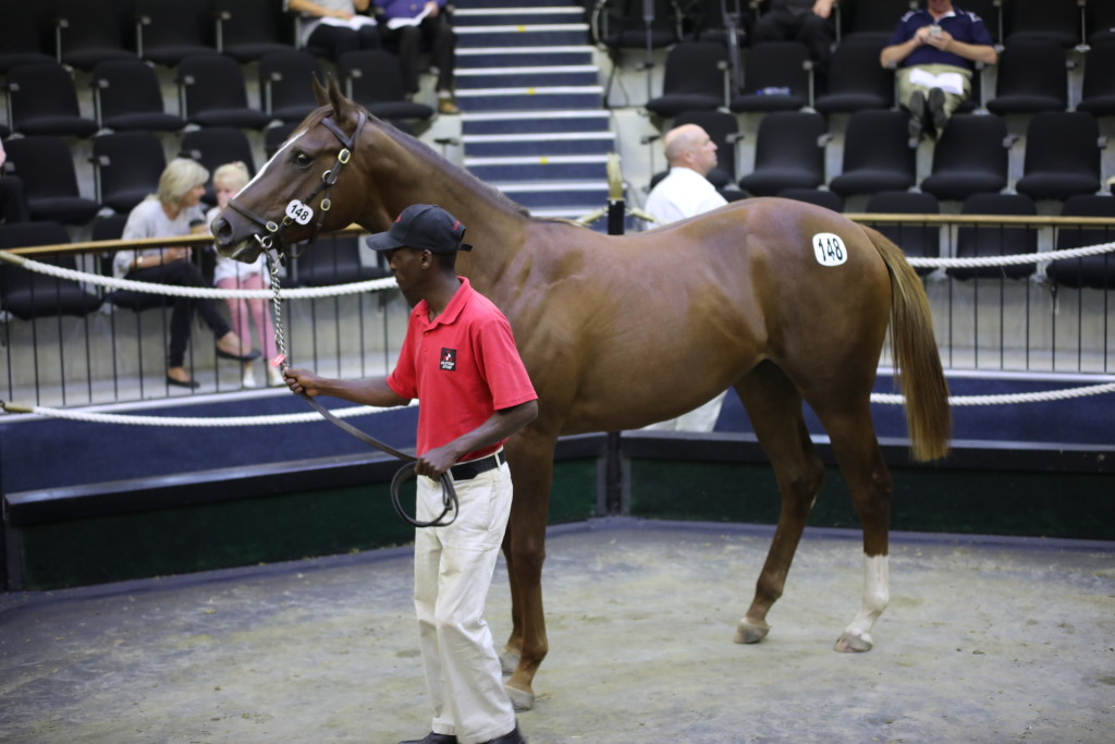 Lot 148 from Clifton Stud sold for R700 000 to Form Bloodstock. Image: Candiese Marnewick