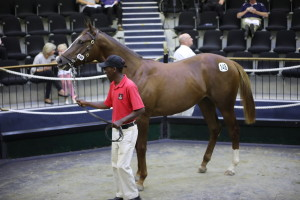 CLIFTON STUD TO OFFER A PERFECT TEN AT 2YO SALE