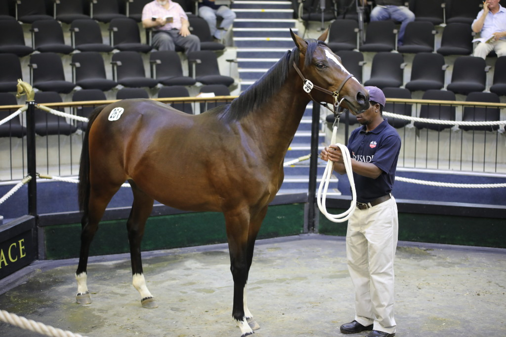 Scott Bros sold the first Kingsbarns at a BSA sale for R400 000 to David Ferraris. Image: Candiese Marnewick