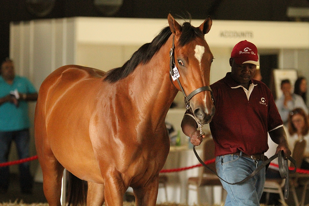 Piemonte Stud At The National Yearling Sale