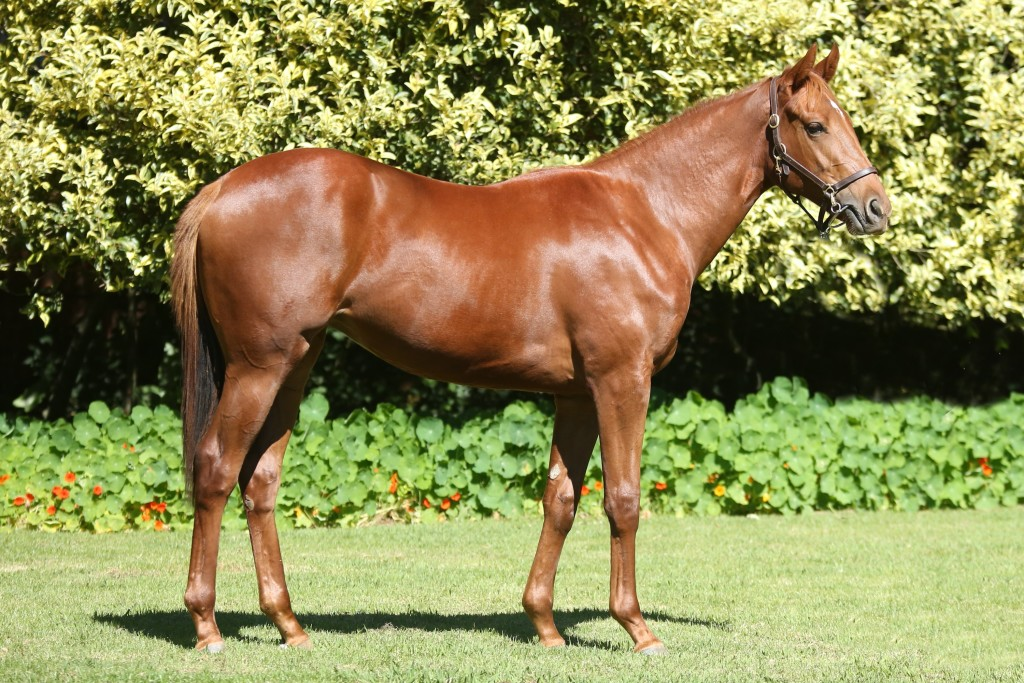 Lot 234 Maculate Crusade - Ramp Vamp by Jet Master Half-sister to The Rising Legend and Cannes.