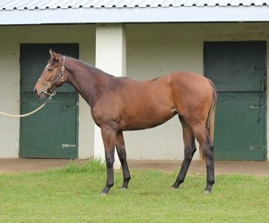 Lot 298 Just Amazing	f. by Just As Well - The Angelus. Stable C75. Registered as a KZN-bred.