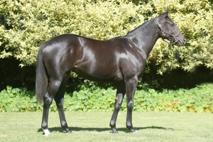 Lot 346 Spectral Crusade - Angel Child by Mogok Half-brother to Gr3 Placed ANGEL'S POWER