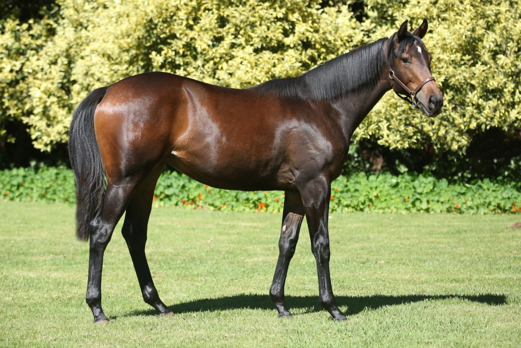 Lot 478 Land Of Rubies Mogok - Majestic Legend by Royal Academy Dam has produced 3 runners 3 winners