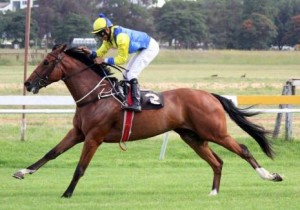 KZN-Breds Take Major Features Over SA Borders