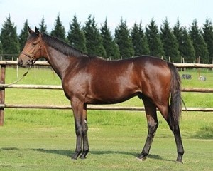 Just Cruised In pictured at Spring Valley Stud prior to his sale at the Nationals.