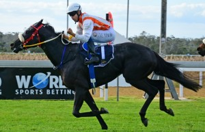 Alfeo Wins East Cape Champion 2YO Colt