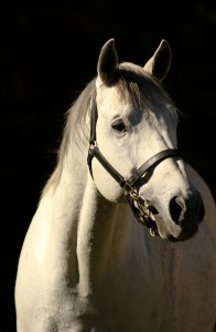 Yellow Star Offer Six At KZN Yearling Sale