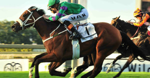 Takingthepeace did KZN proud this season, taking 2 legs of the Triple Tiara.
