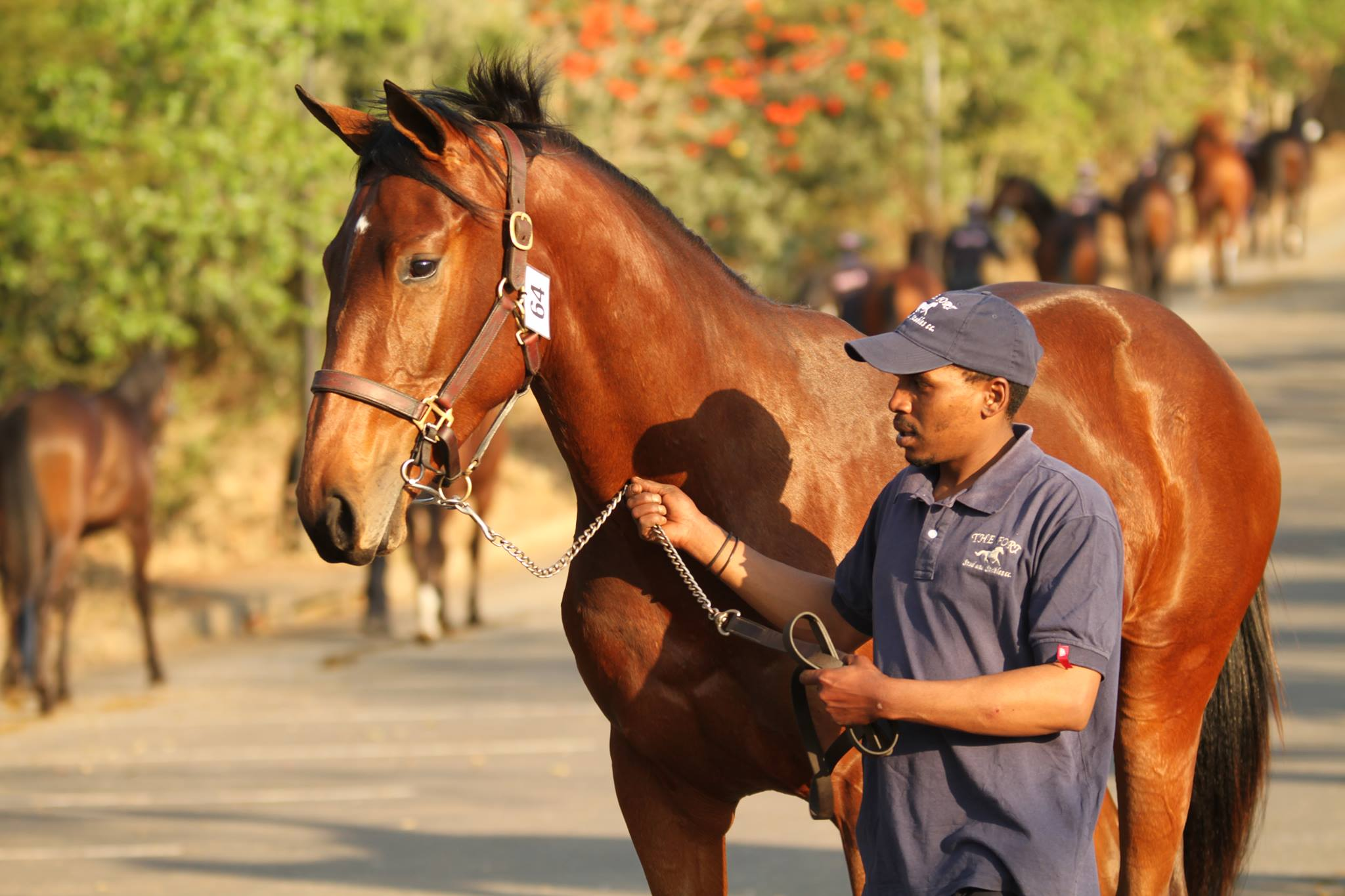 The Fort Stud at the 2017 KZN Yearling Sale. Image: Candiese Marnewick