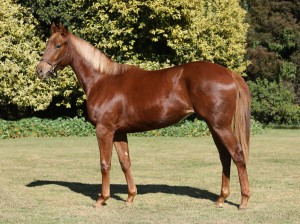 Lot 115 Mouille Point f.  Crusade x Cape Sunset
