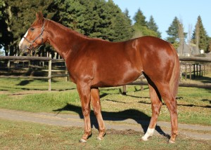 Lot 201 16irish Honour c.  Visionaire x Irish Honour