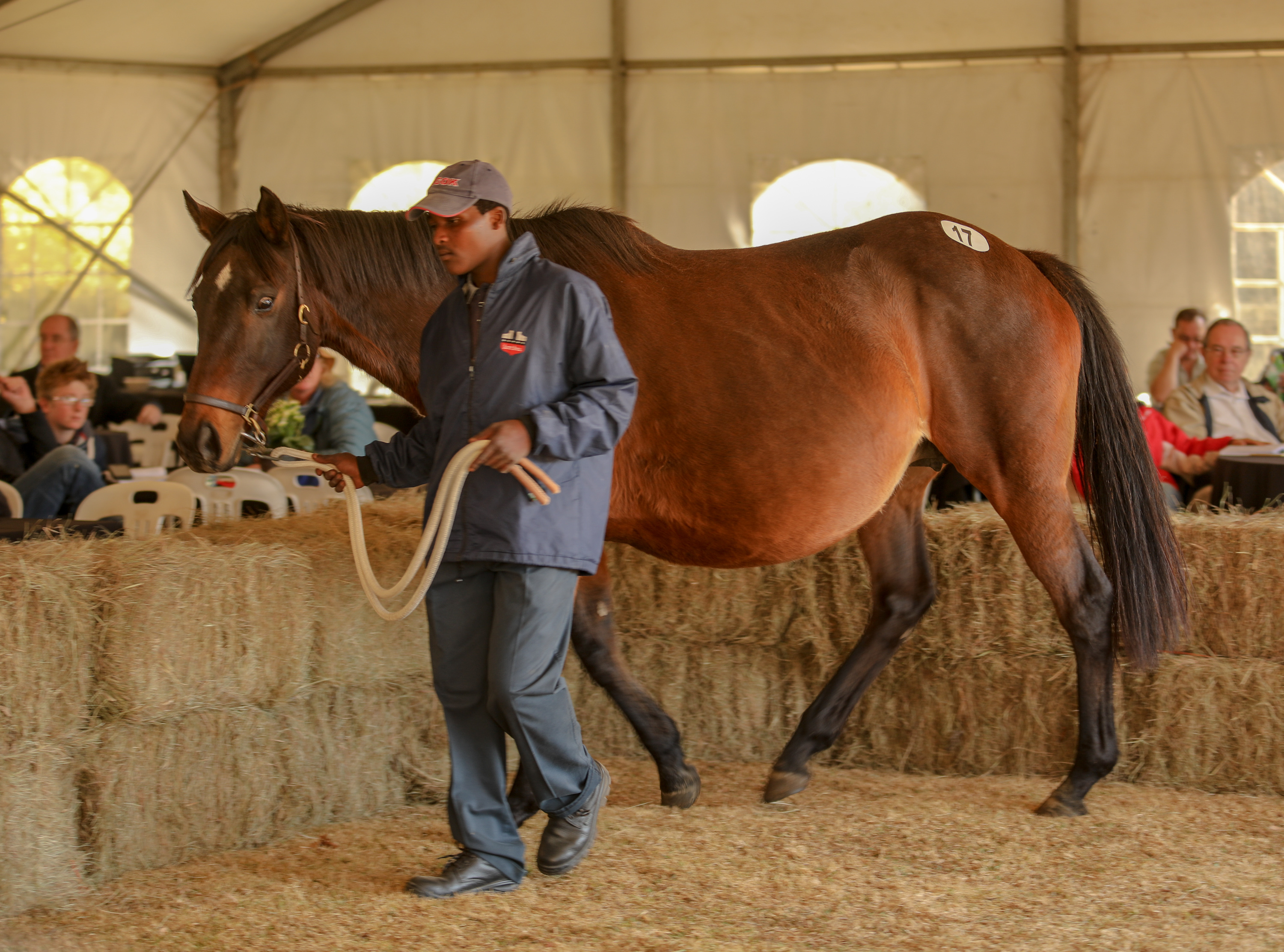 Sahara sold in foal to Crusade to Summerview Stud for R170 000. Image: Candiese Marnewick