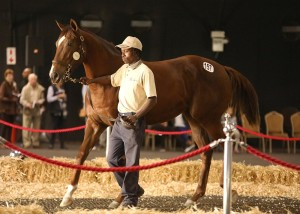 Bush Hill Stud Tops #kznbreds At KZN Yearling Sale, Sales Topping Filly