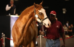 KZN YEARLING SALE CATALOGUE NOW ONLINE