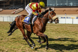KZN Breeder Ms Nothemba Mlonzi Gets 100% Winners To Runners In First Crop