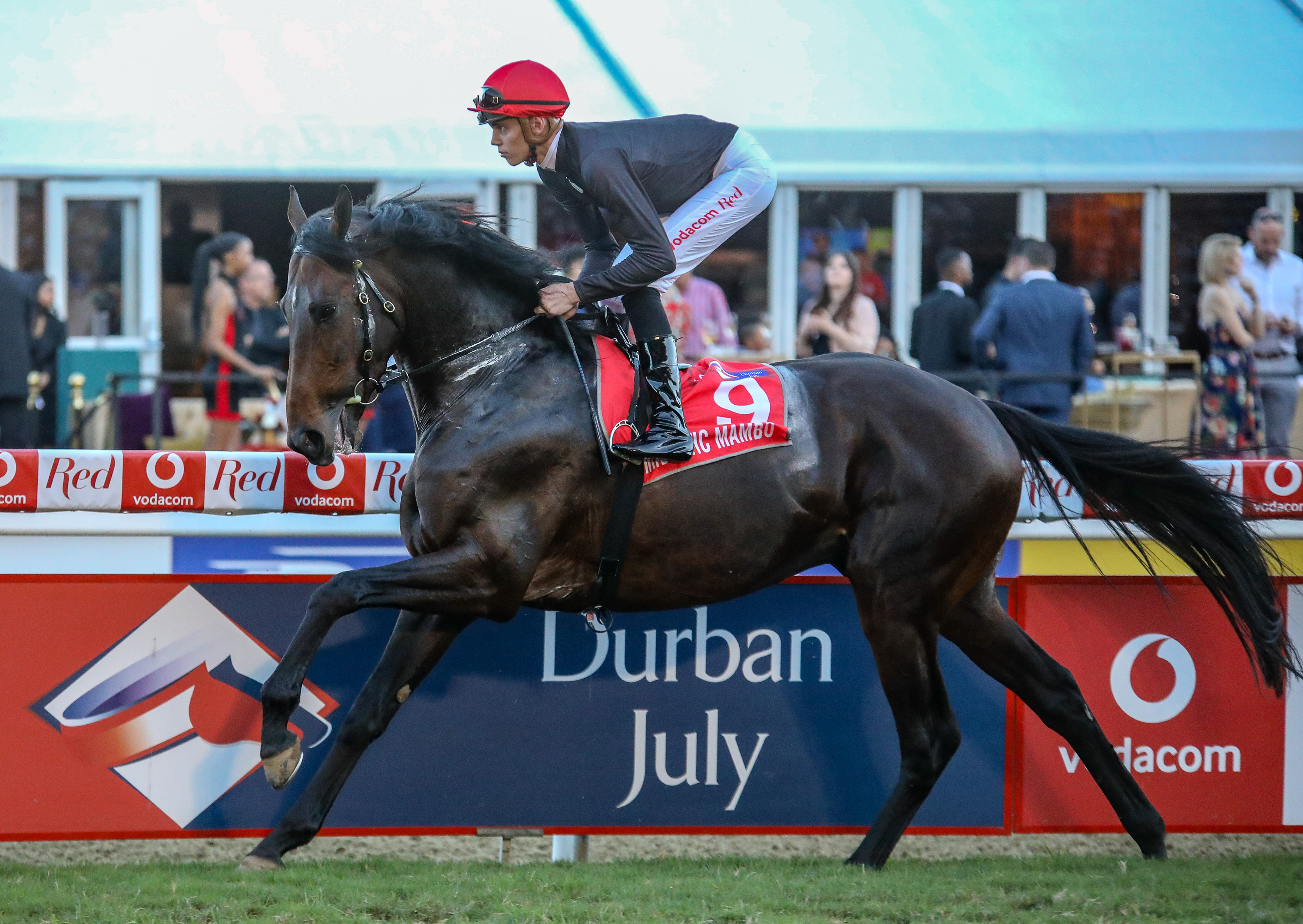 Majestic Mambo canters down to the start of the 2018 Vodacom Durban July. It was his last start on South African soil. Image: Candiese Marnewick