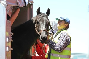 Progress In Equine Export Protocols