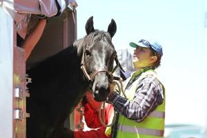 Progress In Equine Export Protocols