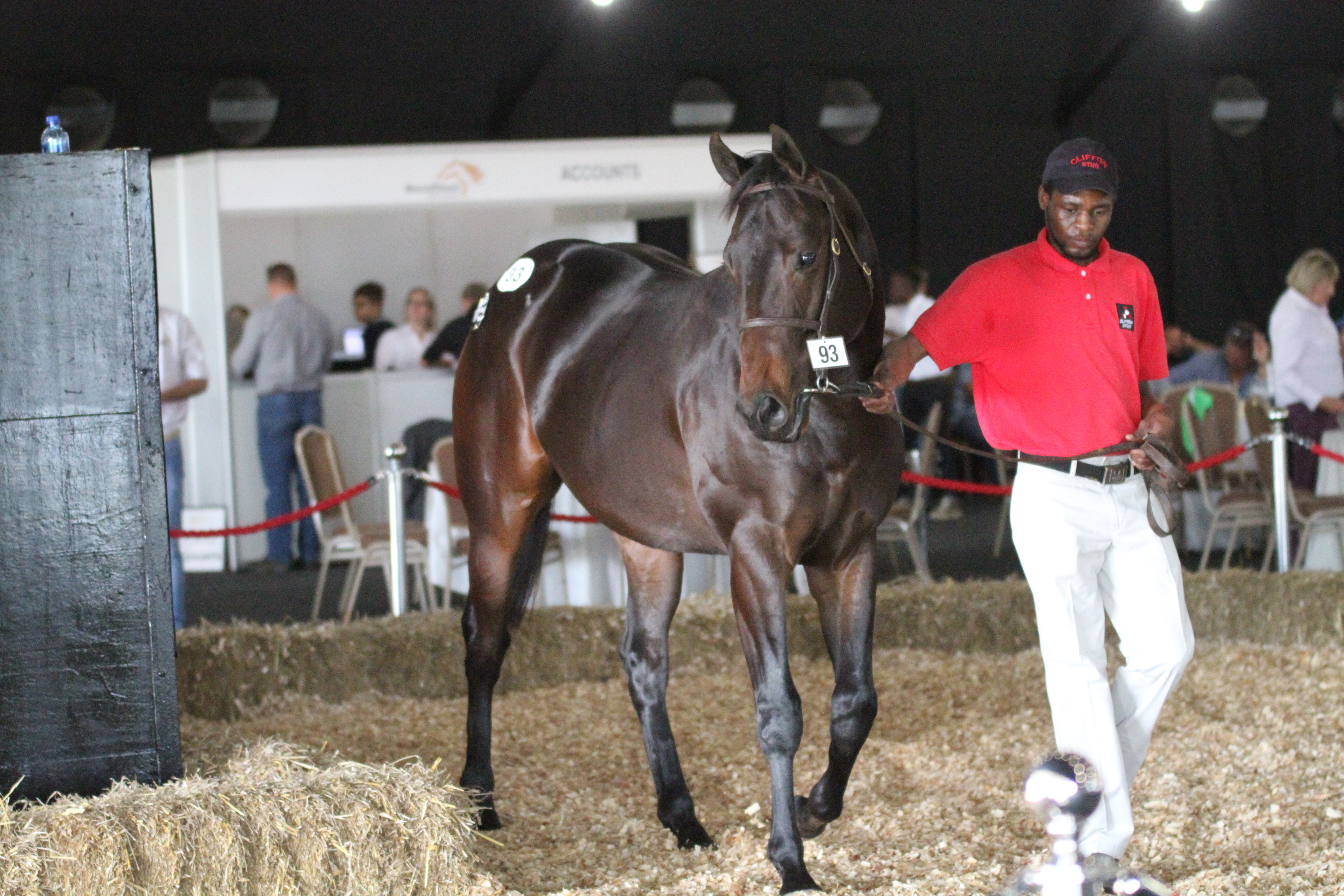 Clifton Stud at the 2017 KZN Yearling Sale. Image: Candiese Marnewick