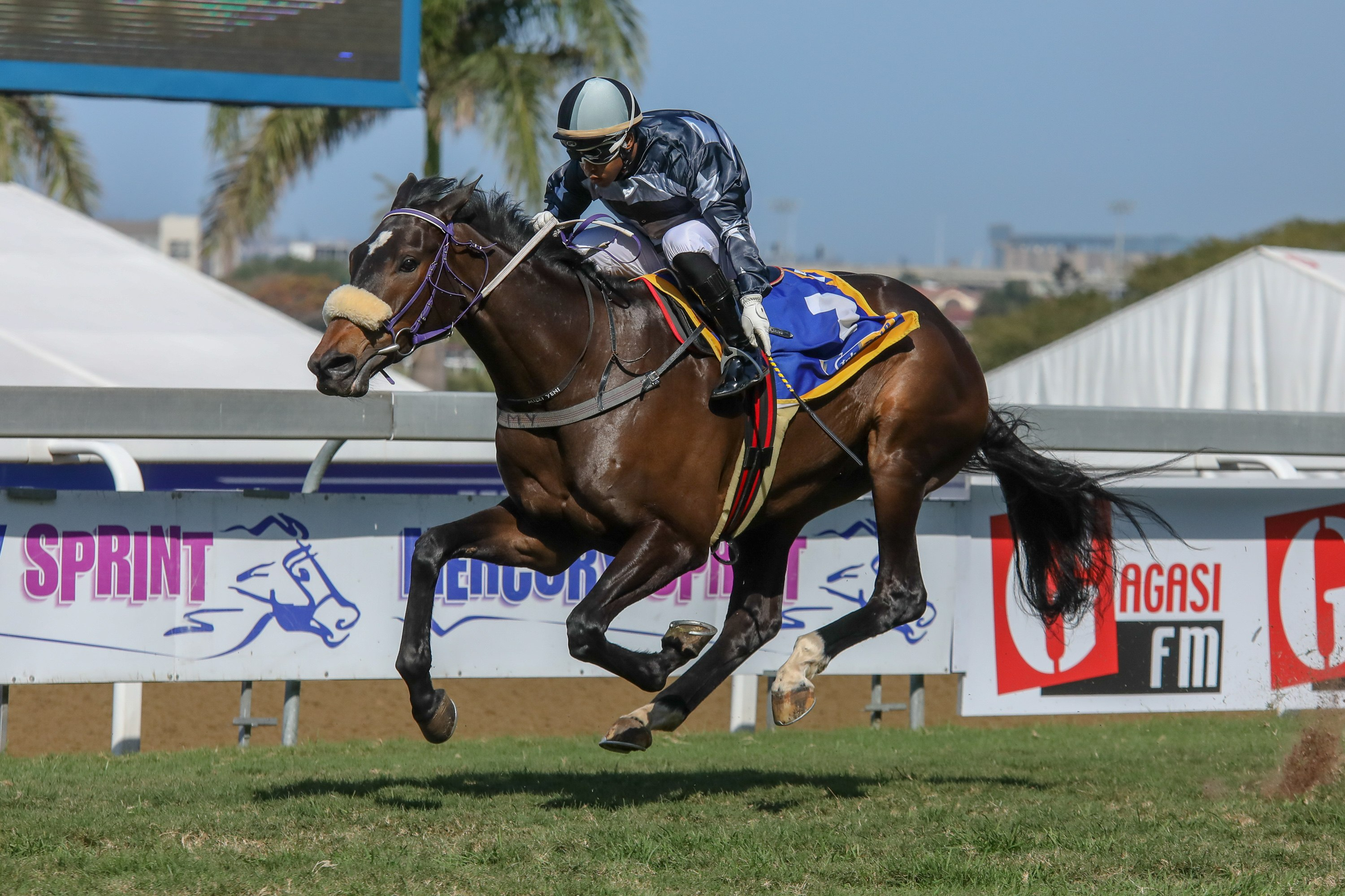 Perpetual Flame by Irish Flame flies home to open Gold Cup Day. Image: Candiese Marnewick