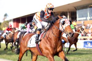 Equus Champion Sprinter Talktothestars