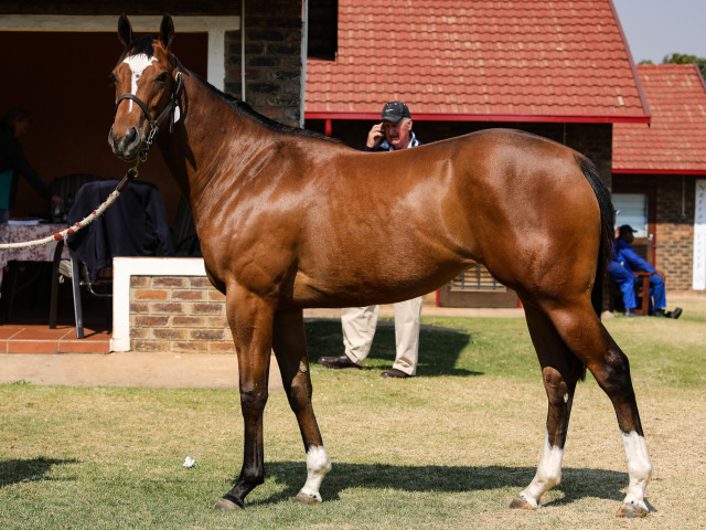 Spring Valley's beautiful Oratorio filly who sold for R140 000. Image: Candiese Marnewick