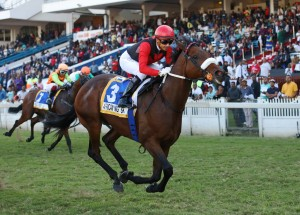 KZN Welcome New Mares To Stud