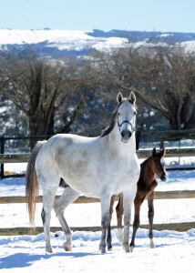 Rabada pictured with his grey dam Jordie at Summerhill Stud as a foal. Image: Summerhill Stud