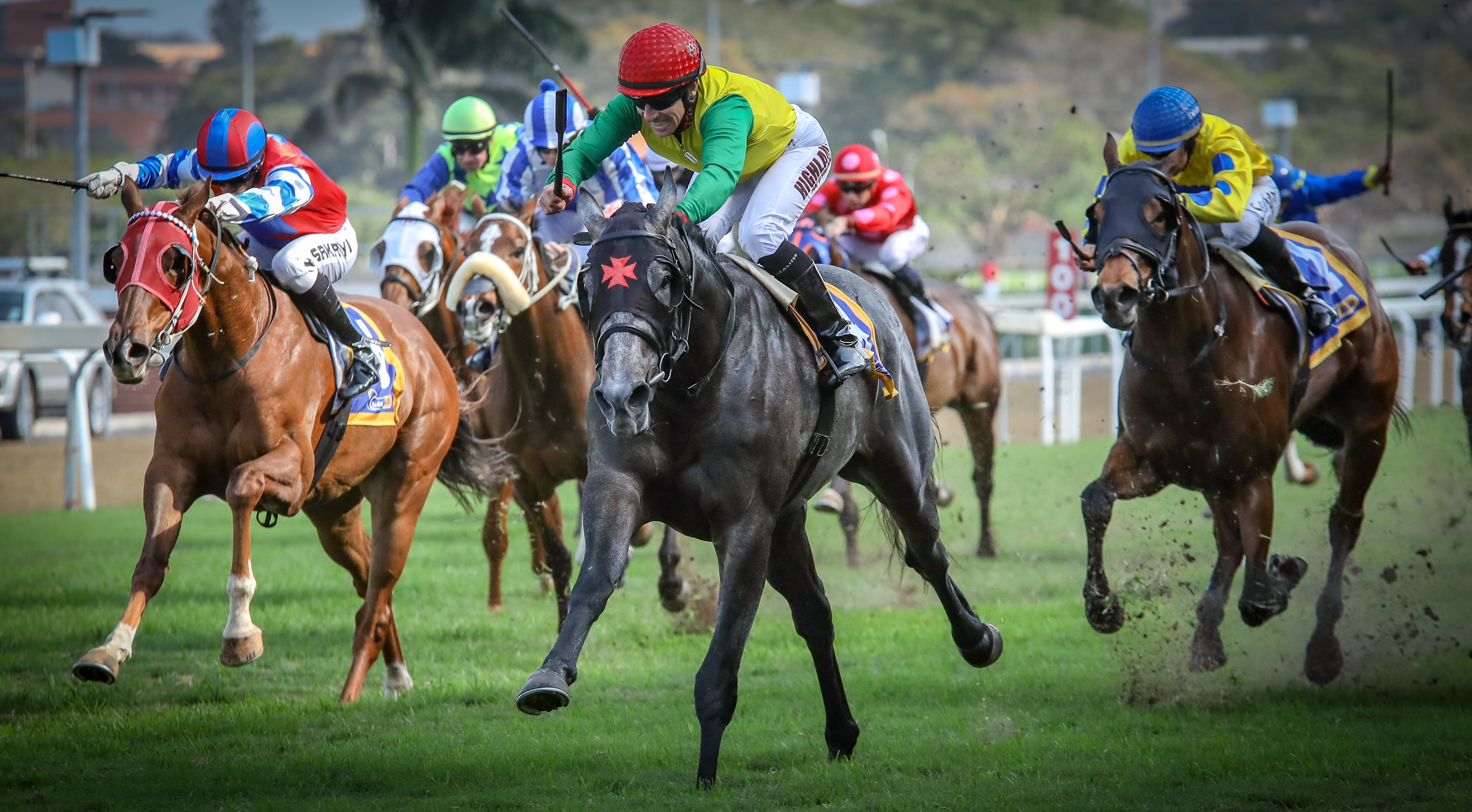 White Lightning flies home to victory on the Greyville turf, and is a very exciting prospect in training with Paul Lafferty. Image: Candiese Marnewick