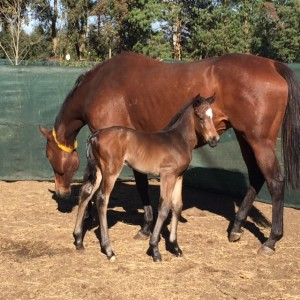 Yellow Star Welcome Foals Of 2018