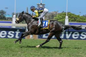Spring Valley Crusade Flies Home On Debut