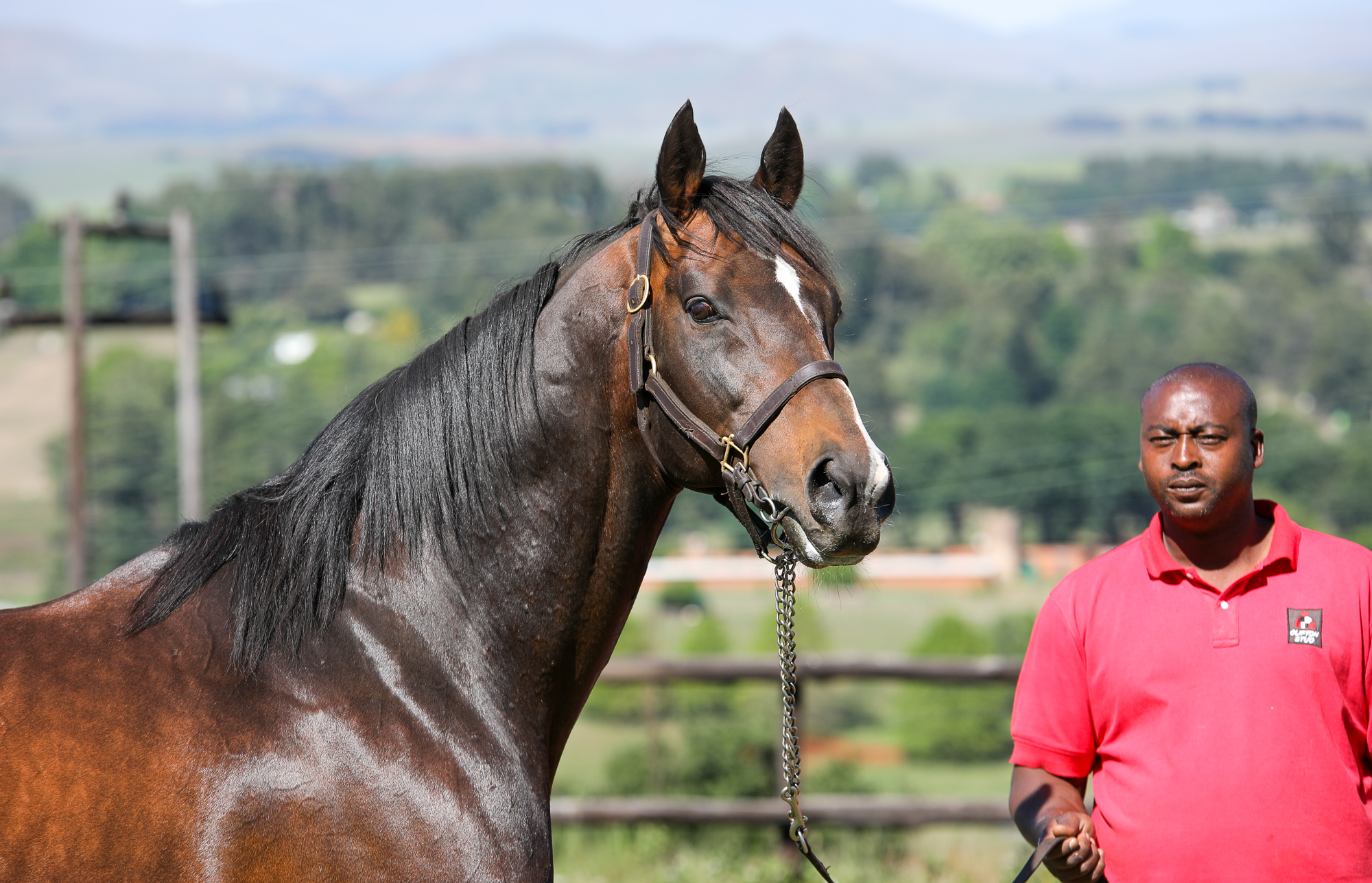 Mambo In Seattle at Clifton Stud. Image: Candiese Marnewick