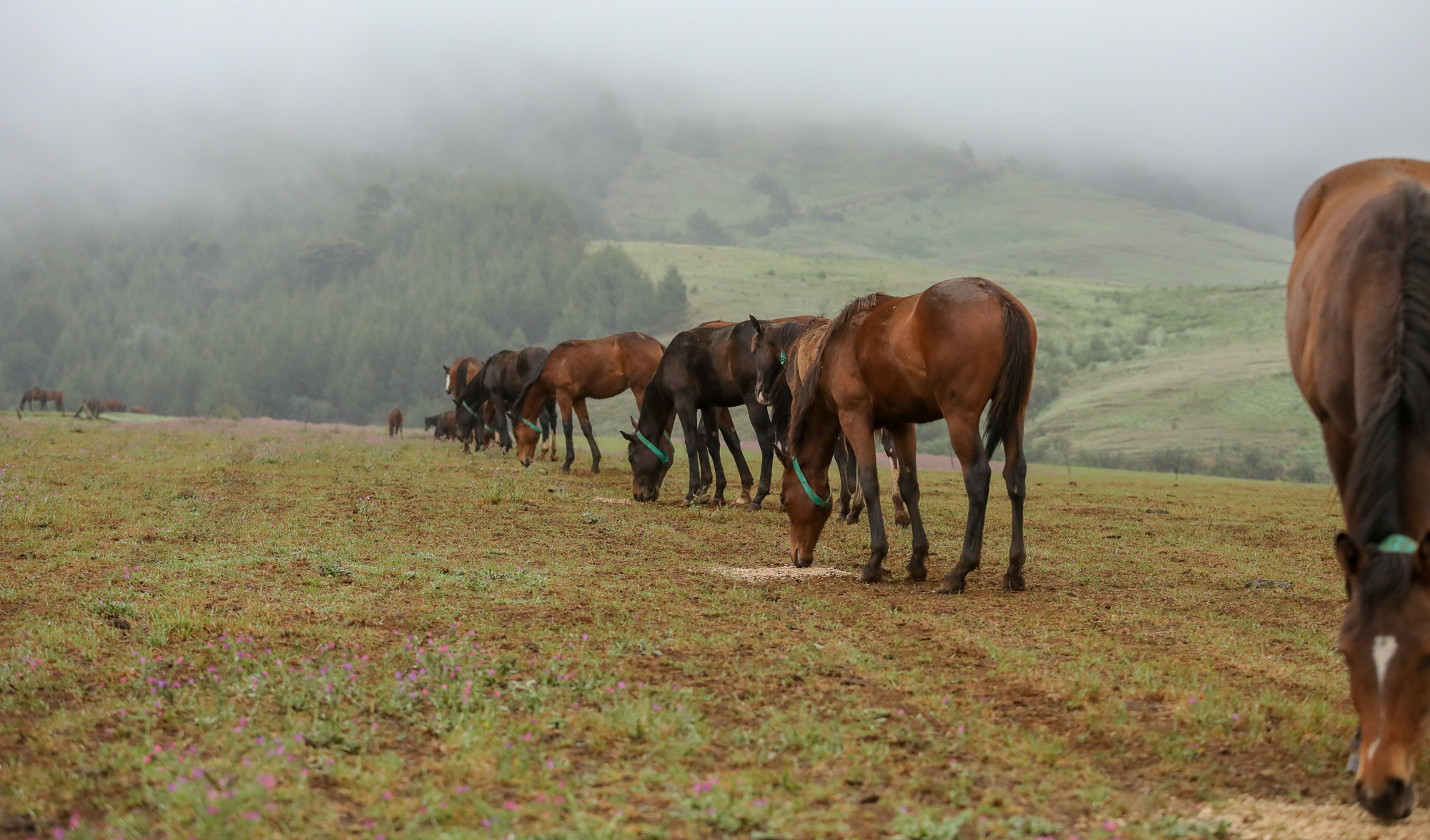 Rathmor's yearling colts enjoying breakfast on a cold misty morning at Rathmor. Image: Candiese Marnewick