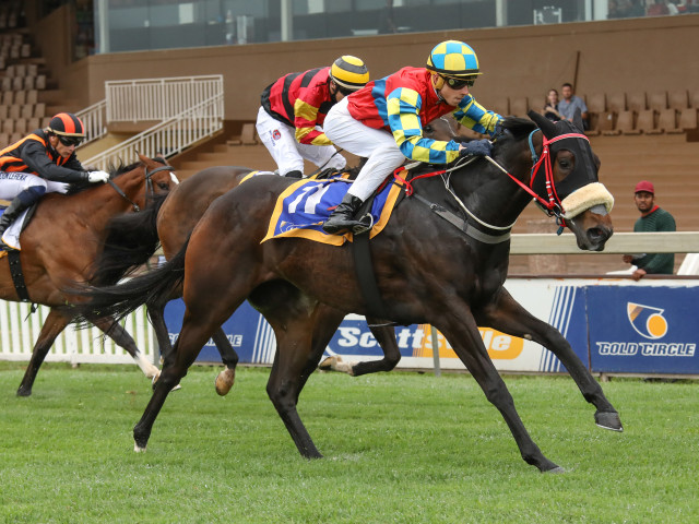 I'm Free wins at Scottsville on Sunday. Her pedigree indicates she will go further. Image: Candiese Marnewick