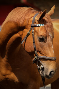 The Sandwich Man, the Duke Of Marmalade half-brother to Takingthepeace. Image: Candiese Marnewick