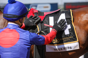 #kznbred Viva Pipa Takes Emperors Palace Ready To Run Cup