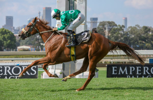 #kznbred Ronnie's Candy Defeats Quality Field In Gr3 Starling Stakes