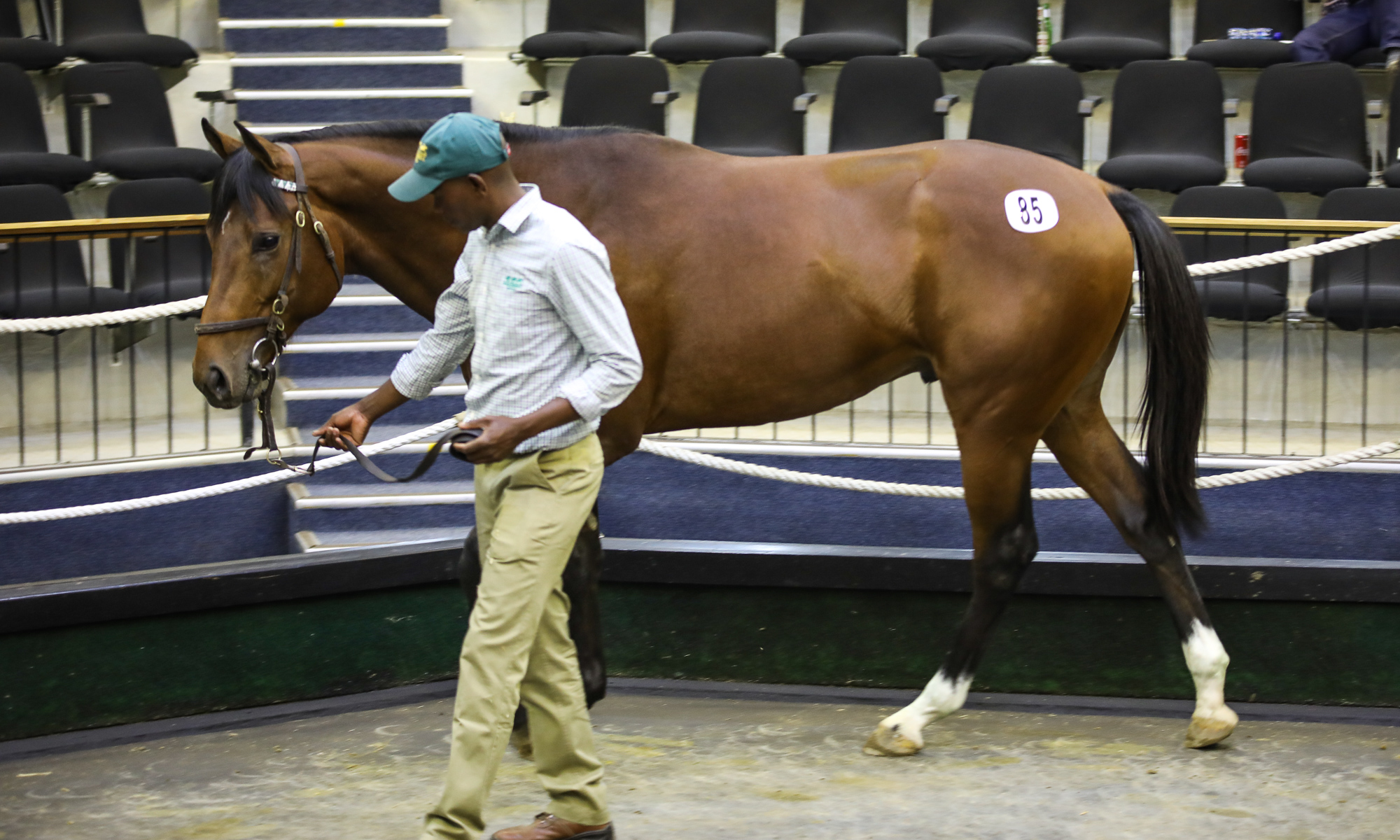 The sales topper - Lot 85 Hurricane Harry, the half-brother to Rabada who sold for R2,3-million. Images: Candiese Marnewick