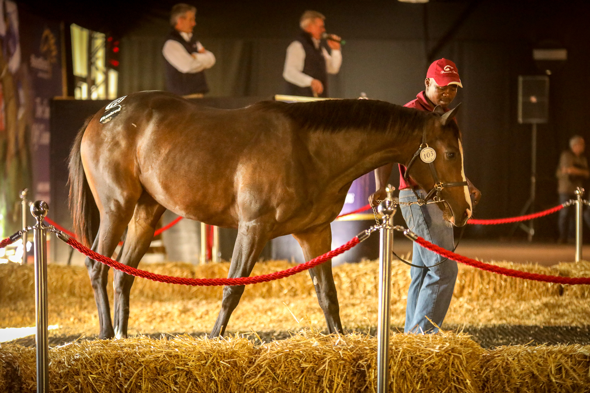 Brandina becomes the first winner for her sire Capetown Noir this afternoon at Fairview. Image: Candiese Marnewick