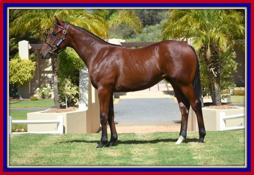 Lot 123, from the first crop of Futura on offer sold for R1,2-million. Image: Ridgemont Highlands