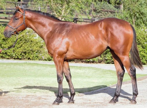 Lot 224 by Coup De Grace, sold to Rathmor for R750 000.