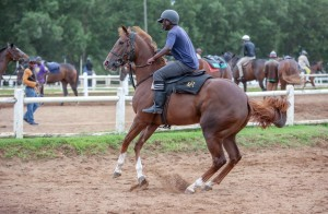 Crusade Filly Flies Home For Spring Valley